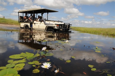Game drive at Chief's Camp, Okavango Delta