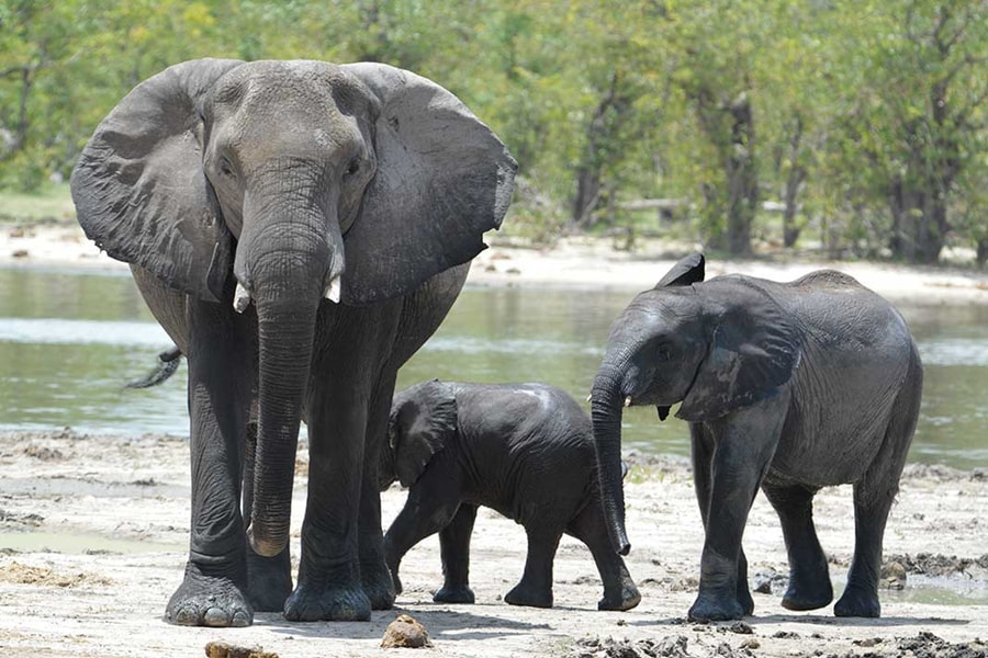 Elephant family, Khwai Private Reserve, Botswana